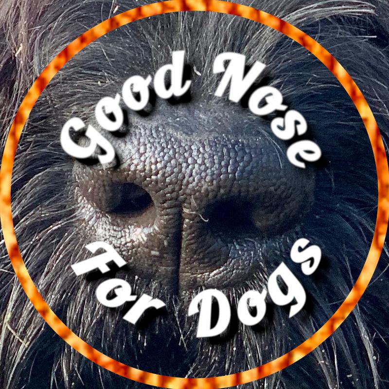 Hunde-Videos: Was macht Hunden Spaß?