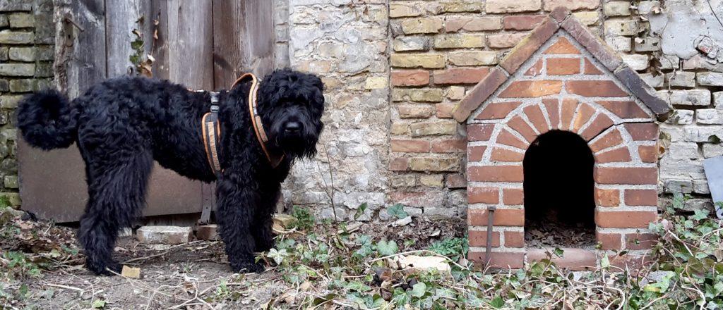 Impressum von richtigen-riecher.de, Schwarzer Russischer Terrier mit Hundehütte