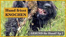 darf-Hund-Knochen-fressen