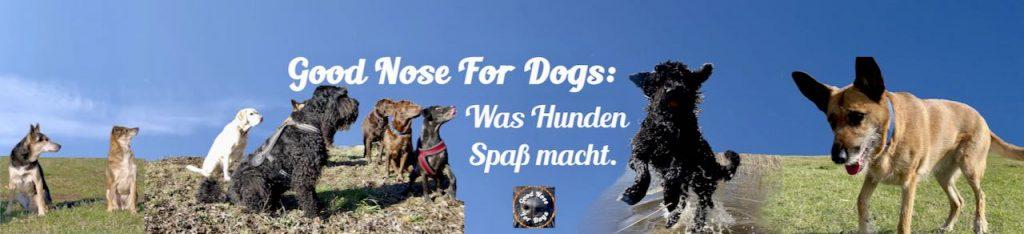Hunde- und Hundehalter-Erfahrungen