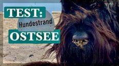 Hundestrand Test Ostsee Urlaub mit Hund in Deutschland