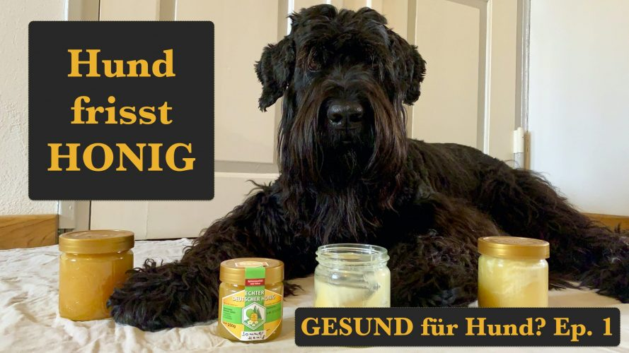Honig-gesund-für-Hund-Honig-fressen