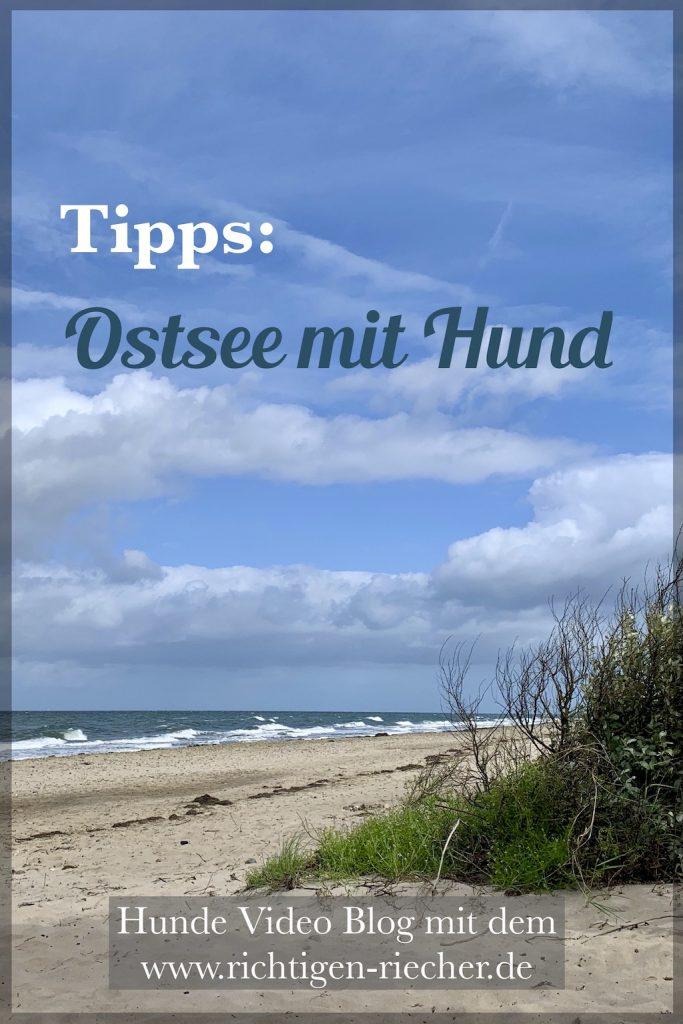 Tipps für den Ostsee Urlaub mit Hund