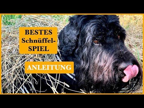 BESTES-Hunde-Schnüffelspiel-MIT-Anleitung