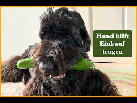 Hund-hilft-Einkauf-tragen