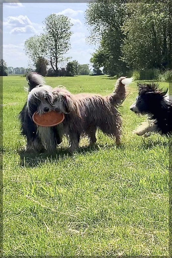 1-Spielzeug-fuer-4-Hunde-geht-das-gut