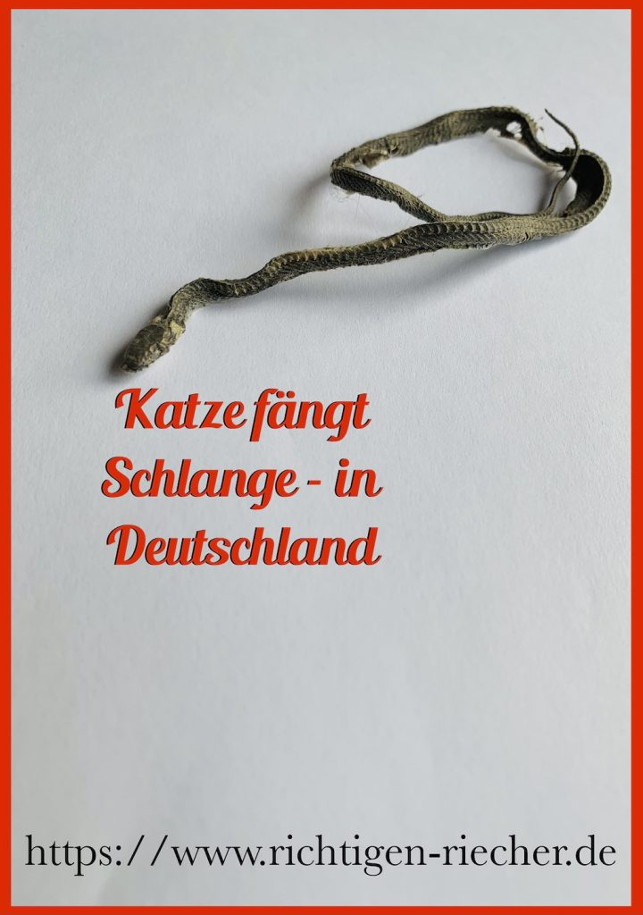 Katze faengt Schlange Deutschland