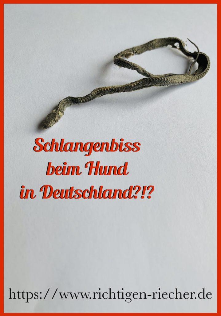 Schlangenbiss Hund Deutschland