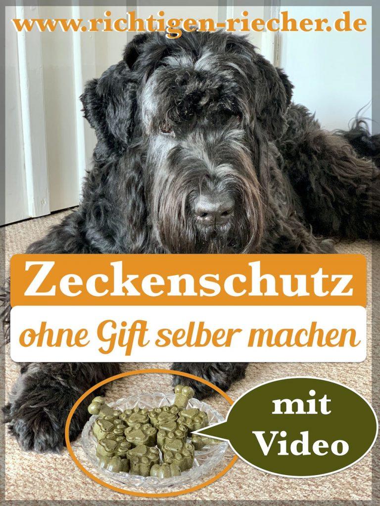 Zecken-Zeckenschutz-Hund-Zistrose